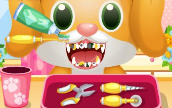 Pet Dentist & Doctor
